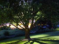 landscape lighting for landscape elements